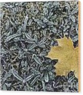 Lonely Maple Leaf And Grass Are Covered With Frost. Wood Print