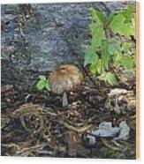 Lonely Mushroom Wood Print