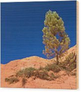 Lonely Pine On The Ocher Hill Wood Print