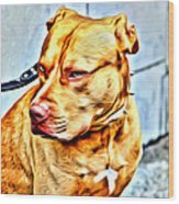 Lonely Pit Bull Wood Print