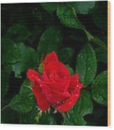 Lonely Rose Wood Print