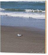 Lonely Sea Gull Wood Print