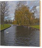 Lonely Swan Wood Print