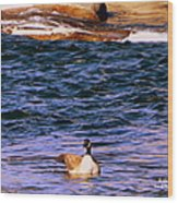 Lonely Swimmer Wood Print