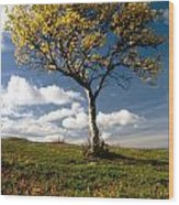 Lonely Tree In Mountain Wood Print
