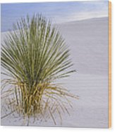 Lonely Yucca Plant In White Sands Wood Print