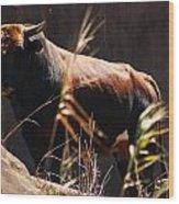 Lonesome Bull Wood Print
