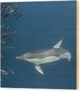 Long-beaked Common Dolphin Hunting Wood Print