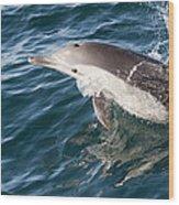 Long-beaked Common Dolphin Porpoising Wood Print