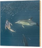 Long-beaked Common Dolphins And Cape Wood Print