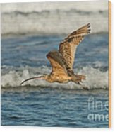 Long-billed Curlew Flying Over The Surf Wood Print