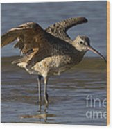 Long-billed Curlew Wood Print