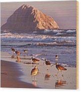 Long Billed Curlew - Morro Rock Wood Print
