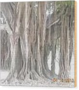 Long Branches Wood Print