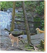 Long Creek Falls Wood Print by Bob Jackson