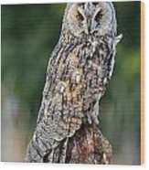 Long-eared Owl 4 Wood Print