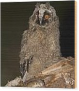 Long-eared Owl Asio Otus Wood Print