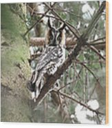 Long Eared Owl At Attention Wood Print