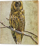 Long Eared Owl Wood Print by Ray Downing