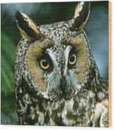Long-eared Owl Up Close Wood Print