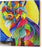 Long Haired Chihuahua Wood Print