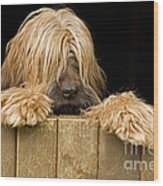Long-haired Dog Wood Print