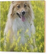 Long Haired Mixed Breed Wood Print