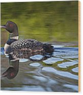 Long Lake Loon Wood Print