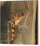 Long-legged Fly In Amber Wood Print