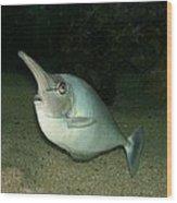 Long Nose Fish Wood Print