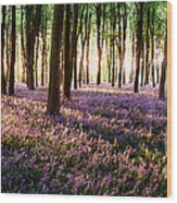 Long Shadows In Bluebell Woods Wood Print