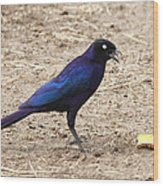 Long Tailed Glossy Starling  Wood Print