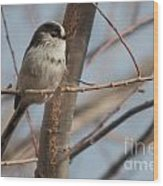 Long-tailed Tit Perched On Twig Wood Print