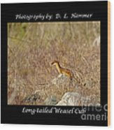 Long-tailed Weasel Cub Wood Print