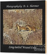 Long-tailed Weasel Cubs Wood Print
