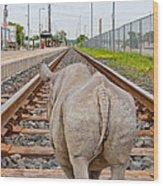 Rhino On A Railway Track Wood Print