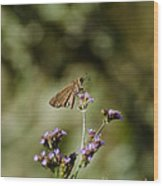 Long-winged Skipper Butterfly Wood Print