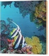 Longfin Bannerfish Wood Print