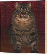 Longhair Scottish Fold Wood Print