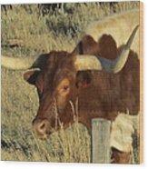 Longhorn # 2 Wood Print