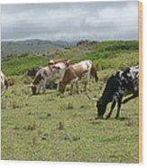 Longhorn Cattle Wood Print