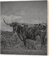 Longhorn Of Bandera Wood Print