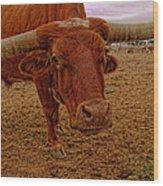 Longhorn Portrait Wood Print