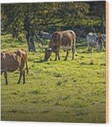 Longhorn Steer Herd In A Pasture Wood Print