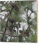 Longleaf Pine Cones Wood Print