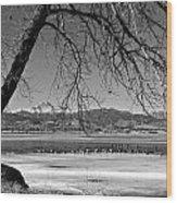Longs Peak Geese Bw Wood Print