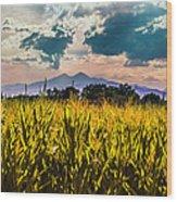 Longs Peak Harvest Wood Print by Rebecca Adams