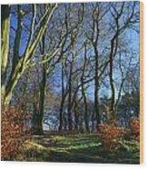 Longshaw Woods Wood Print