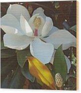 Longue Vue Magnolia Wood Print by Katie Spicuzza