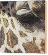 Look Into My Eye Wood Print
